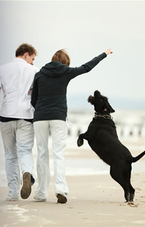 Couple walking a dog on a beach